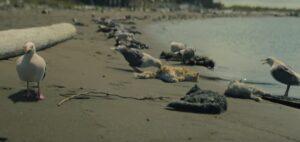 Netflix『真夜中のミサ』第1話 猫の死体とカモメ