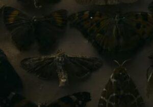 ノーウェイアウトの蛾